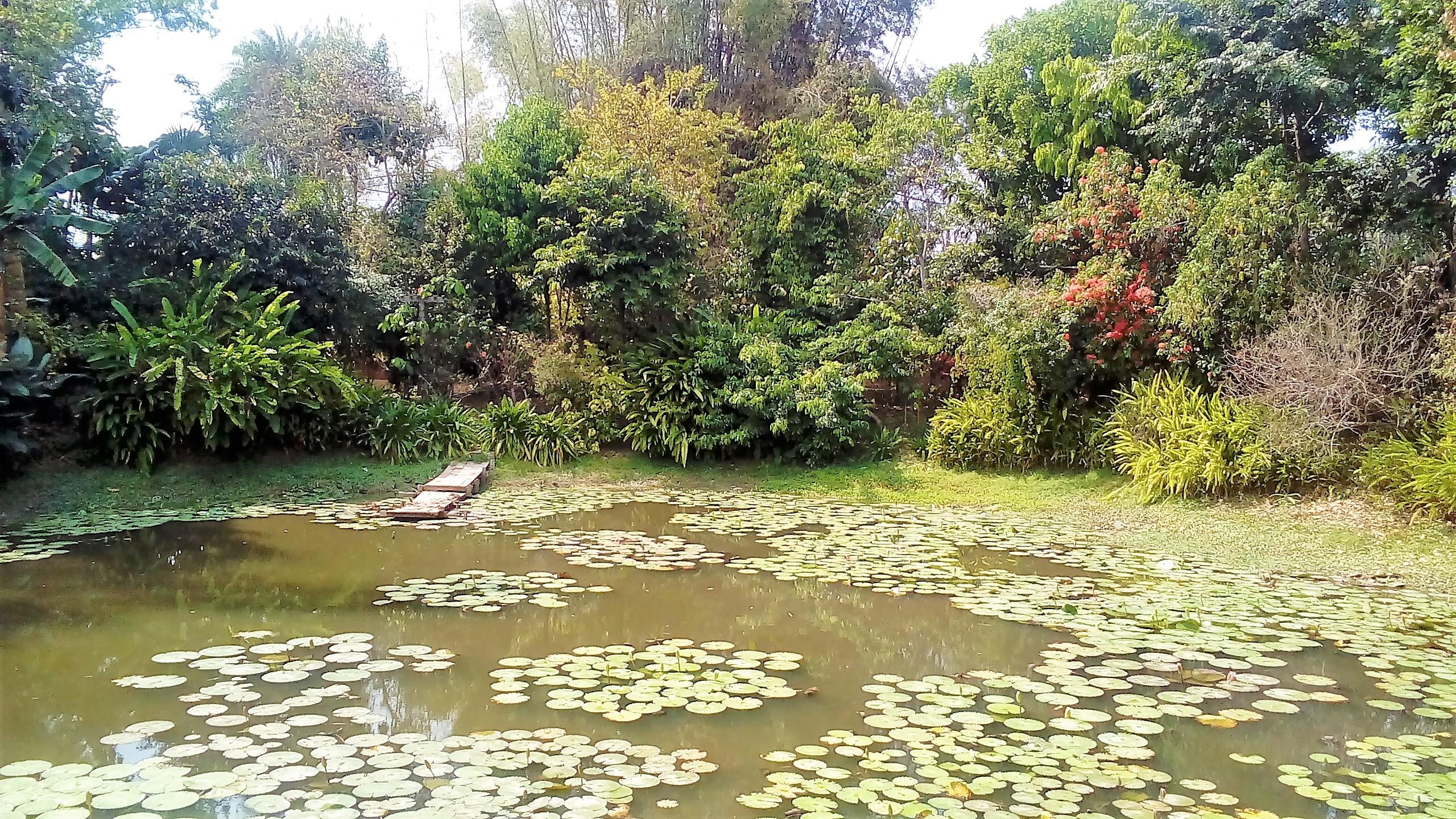 Mein Leben in Chiang Rai (Teil 6)